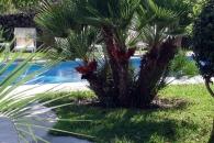 Residence Villa Cristina - Forio di Ischia-2